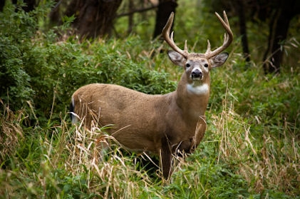 Indiana DRN Sets Dates for State Park Deer Hunting