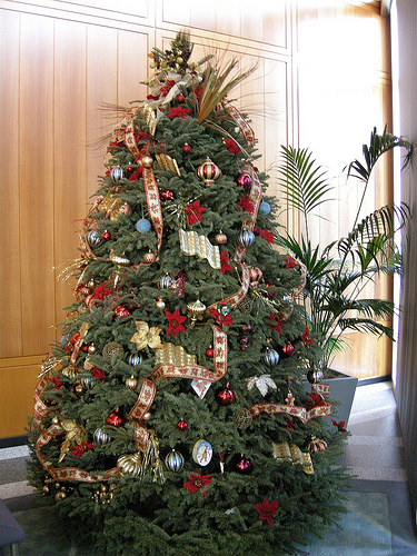 Christmas Tree Prices On The Rise