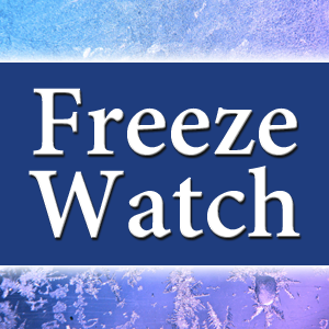 Freeze Watch