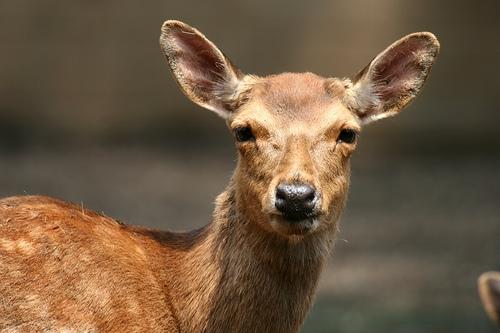 Deer Slams Into Cross-Country Runner During Race