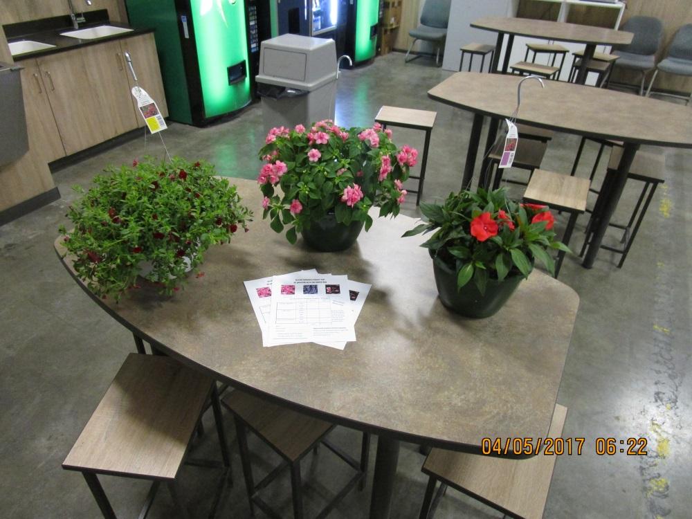 HSHS St. Anthony's Memorial Hospital/Stevens Industries Holding Flower Sales