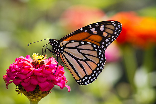 HSHS St Anthony's Memorial Hospital to Hold Butterfly Release This Month