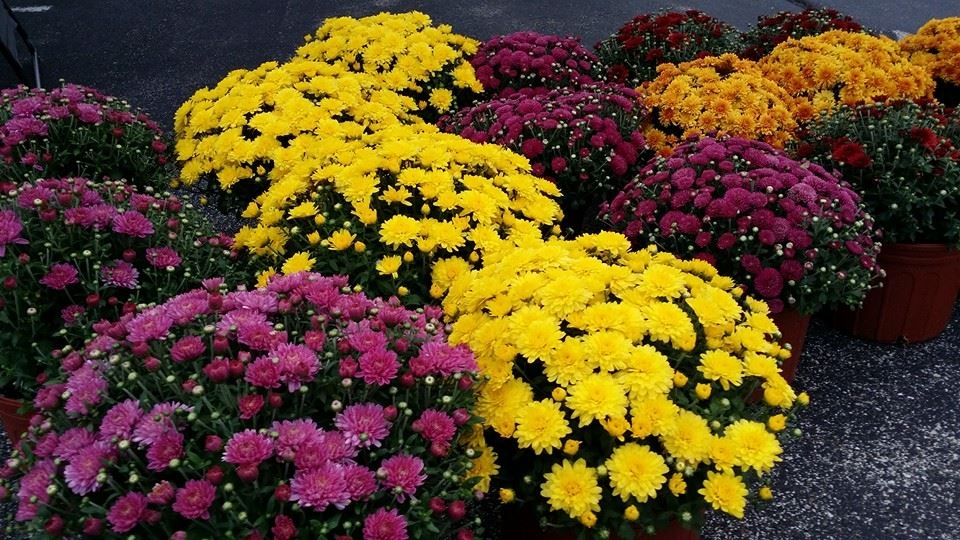 Mums For Moms With Jeff Nalley Thursday!