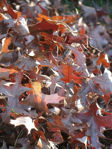 Mattoon Leaf Collection Continues Through December