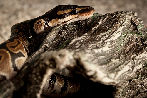 A Man Gets a $190 Ticket For Not Having His Pet Snake on a Leash