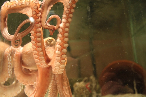 An Octopus Broke Out of an Aquarium and Made It to the Ocean
