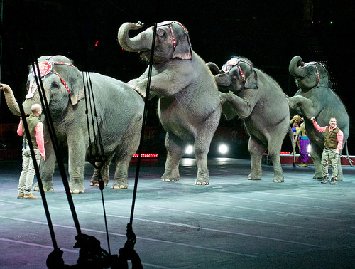 Ringling Brothers' Final Circus Is Just a Few Weeks Away