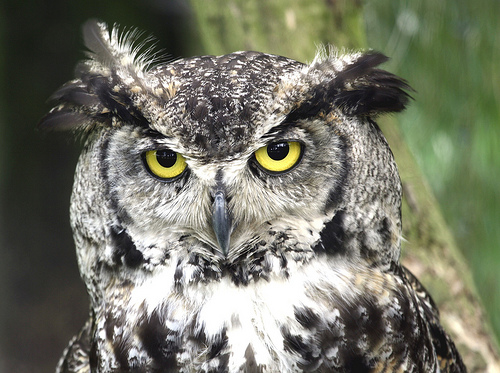 A Family Locks Themselves in a Bedroom When They Hear a Burglar . . . Which Turns Out to Be an Owl