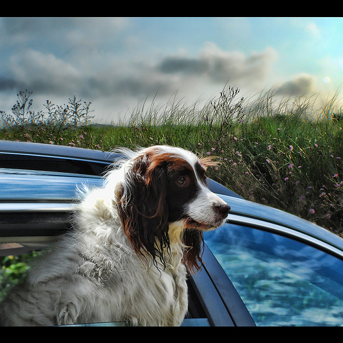Do You Pick a New Car Based on Whether Your Dog Will Like It?