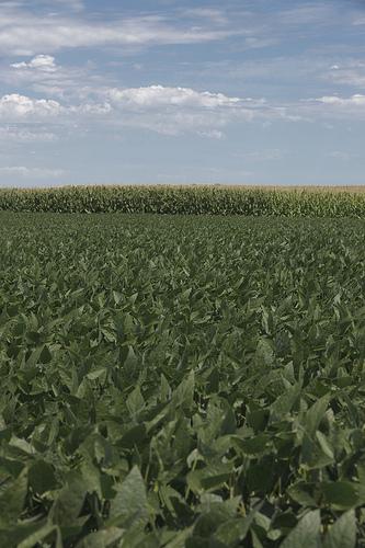 Munson Hybrid's Field Day