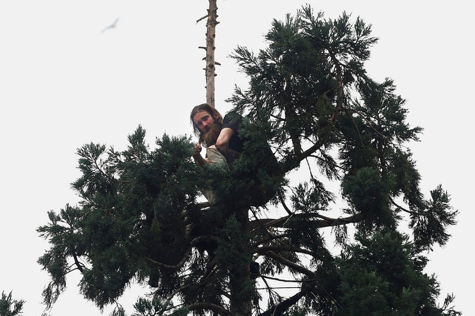 Seattle Man Perched in Tree Has Gone Viral