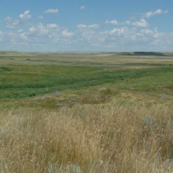An increasing number of rural municipalities in Sask declaring fire bans
