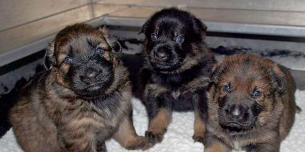 puppy3_