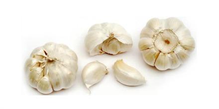 garlic_
