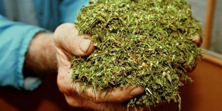 marijuana__