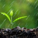 rain_