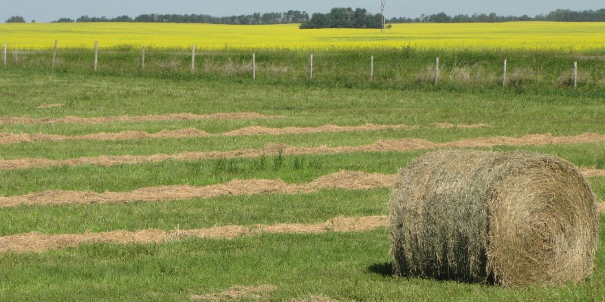 crops_sk_fields_dry__