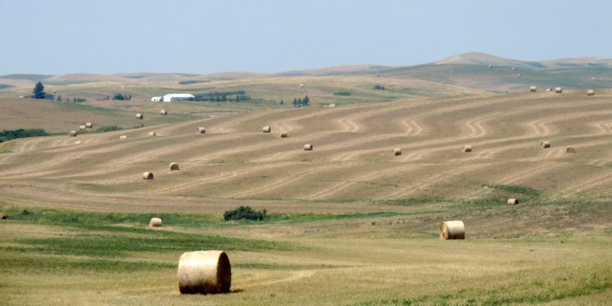 fields_dry__