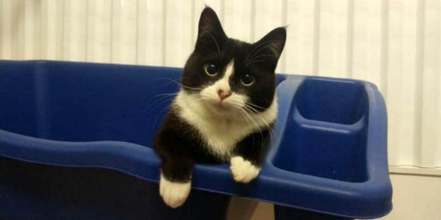 kitten__