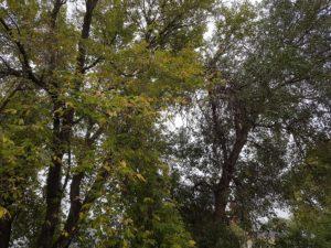 autumn-resize
