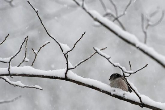 Snow and high winds expected in western Saskatchewan