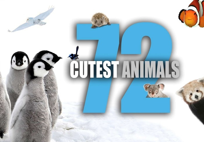 Tuesdays Netflix Binge: 72 Cutest Animals