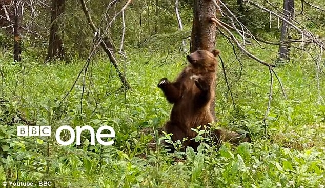 Jungle Boogie Bears