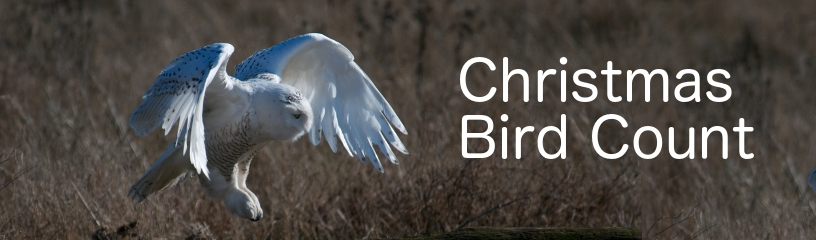 Usual Species Found During Fort McMurray's Annual Christmas Bird Count