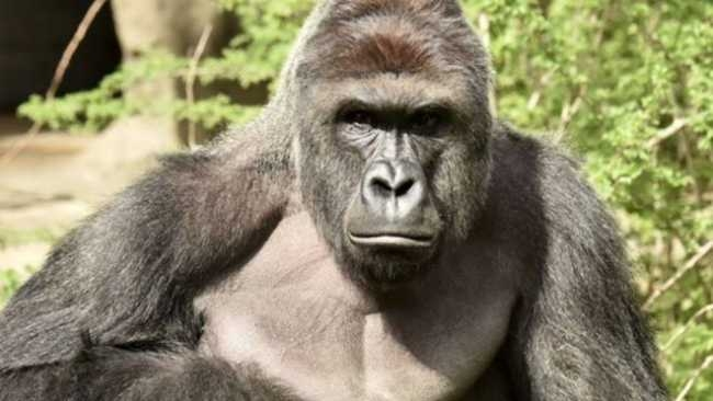 "Dumbest Parts of 2016 #1 ""Harambe"""