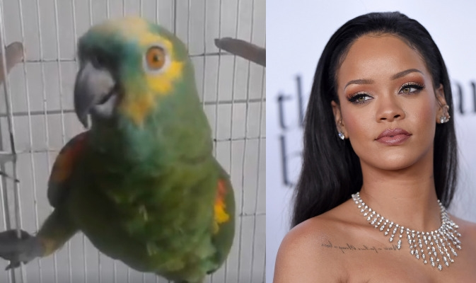 VID - Parrot Sings Rihanna Lyrics Better Than We Can