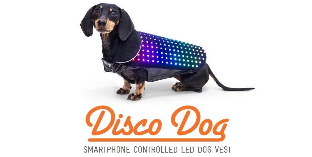 Disco Doggos!