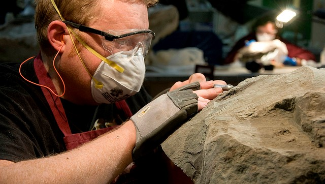 Dinosaur Found at Suncor in 2011 Named After Royal Tyrrell Technician
