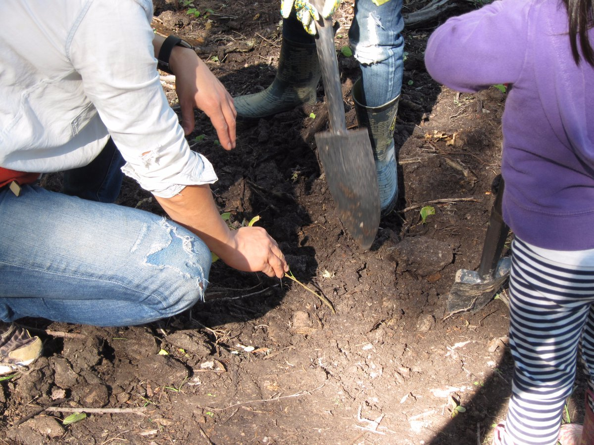 Fort McMurray and St. Albert Scouts Team Up to Plant Hundreds of Seedlings