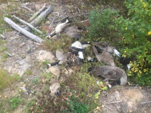 Eleven migratory birds found wasted south of Fort McMurray // Alberta Fish and Wildlife