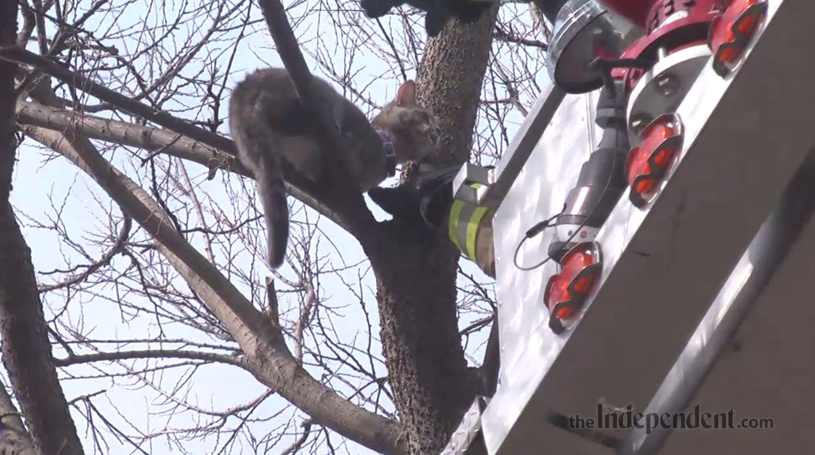 Fire Rescue Saves Cat From Tree!