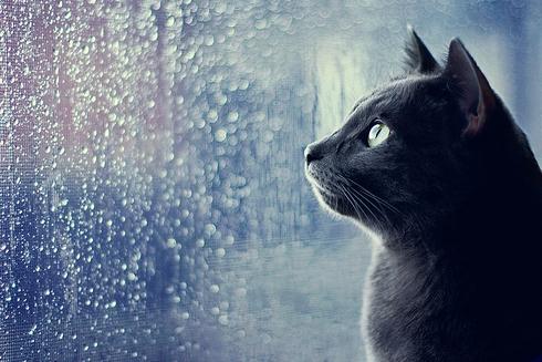 Don't Let Rain Spoil Weekend Fun!