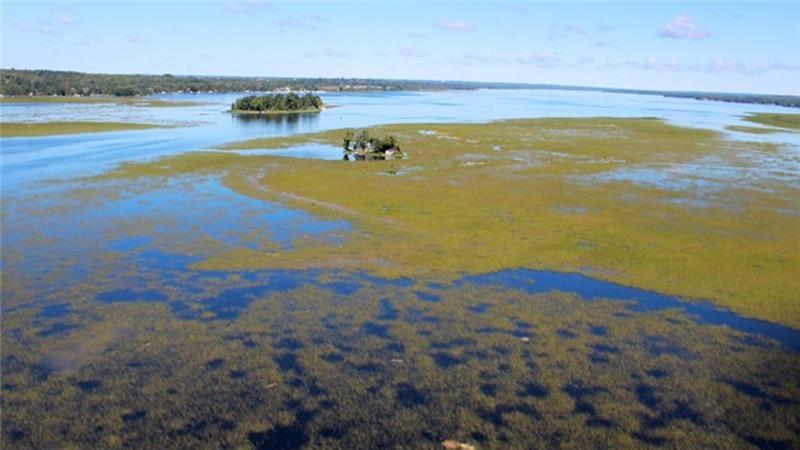 Canada's wild rice wars
