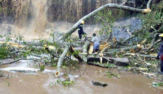 Tree falls on revelers at Kintampo waterfalls; 17 feared dead