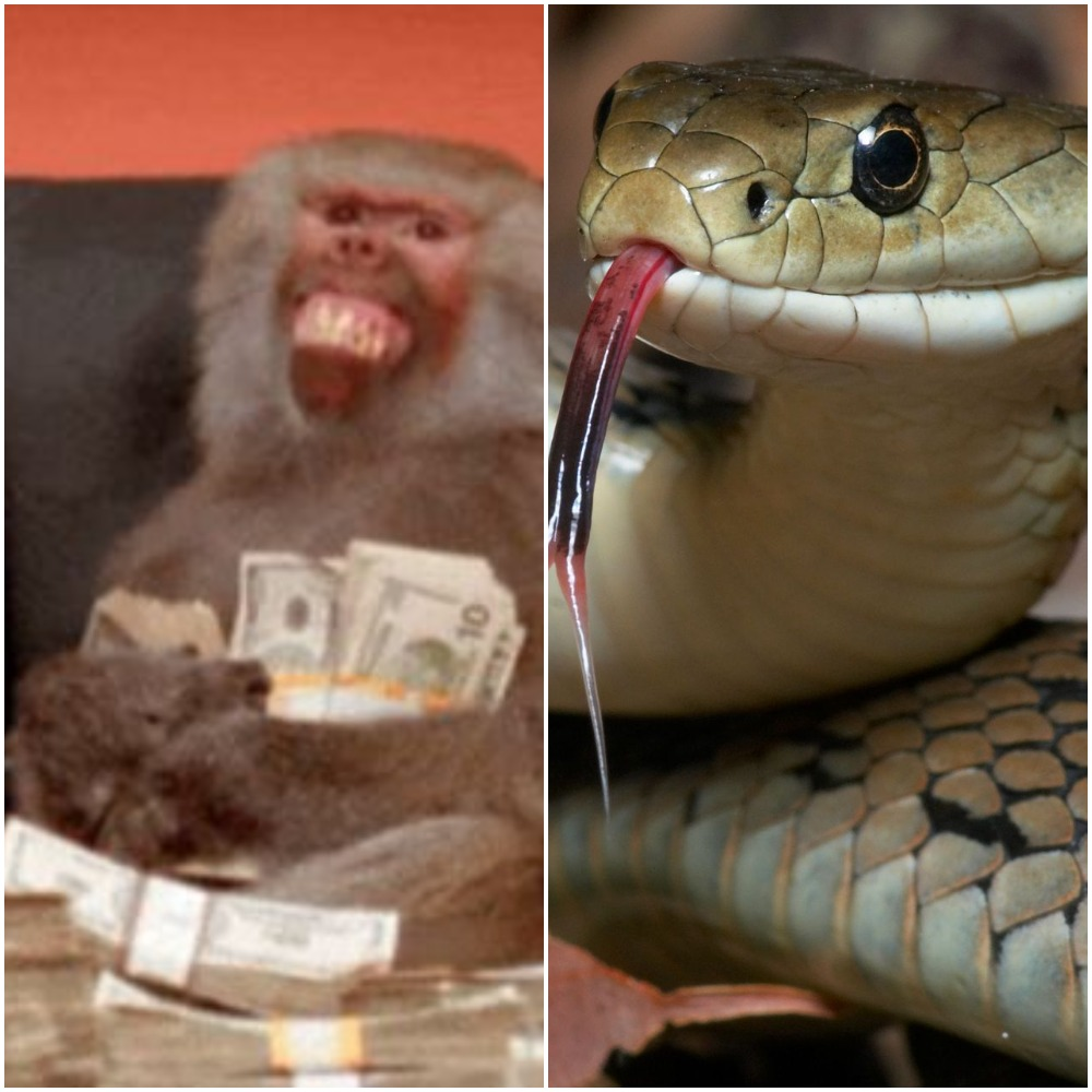 Nigerians react to 'swallowing' of funds by snake, monkeys