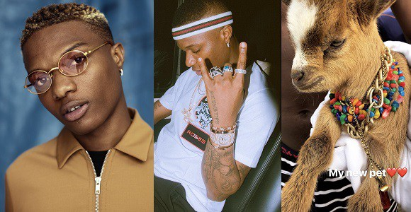 Forget About Alidu & His Goat: Wizkid Gets Himself A Goat As A Pet