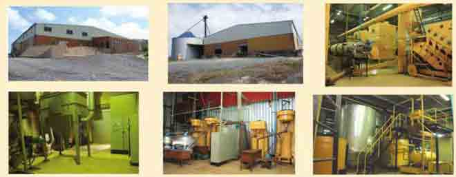 Bank to auction 30,000 tons cocoa factory to defray GH¢33m debt