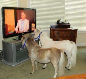 horses-watching-ellen-show