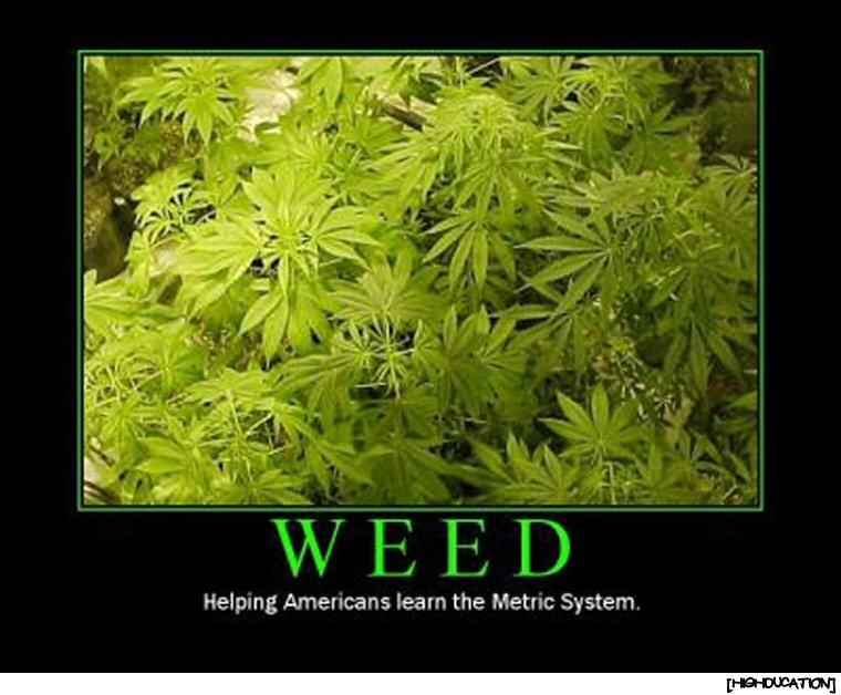 Today's Marijuana Legislation HIGHlights