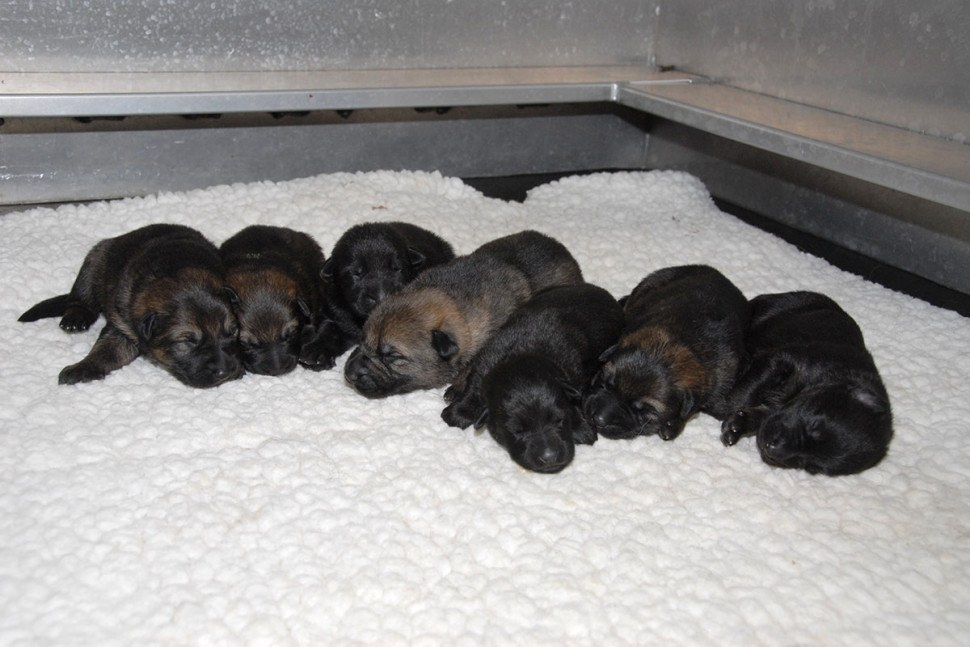 RCMP puppies in need of names!