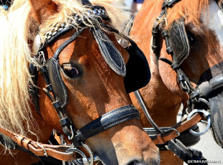 Scott's Monday QuickPoll™: Should Victoria's Horse Drawn Carriages Be Retired Or Should They Stay?