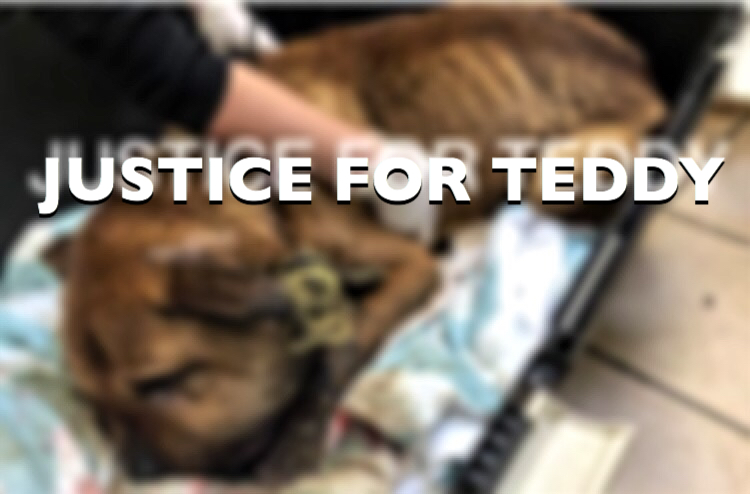 'Justice For Teddy' candle light vigil and funeral, tonight