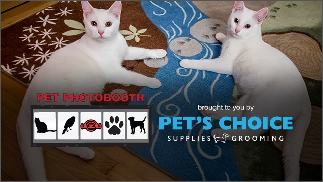 Pet Photobooth (April 2015) :: Dasher + Dancer
