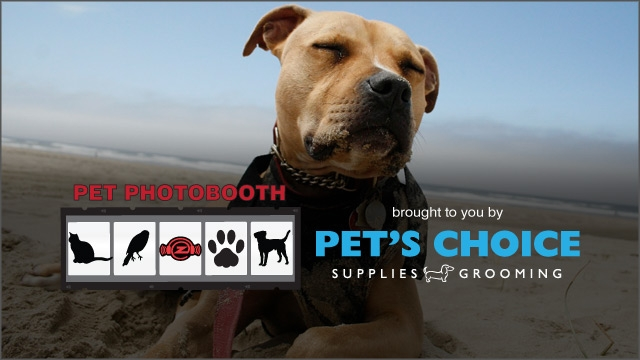 Pet Photobooth (May 2015) :: Otis