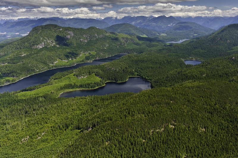 Logging has halted in most of Great Bear Rainforest