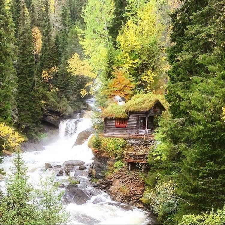 My New Insta Obsession - Cabin Love